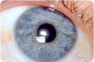 Intra Ocular Lens